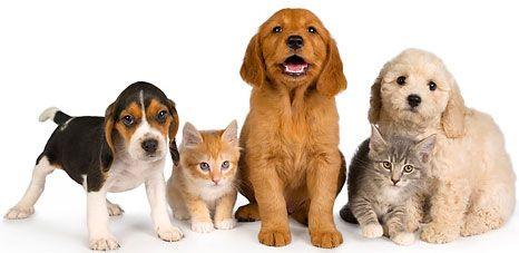 5 Pet Business Ideas You Can Start From Home Online Pet Supplies Pets Love Pet
