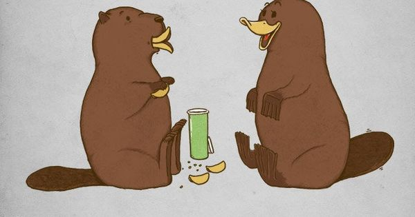 How a beaver flirts with a platypus- this made me smile!