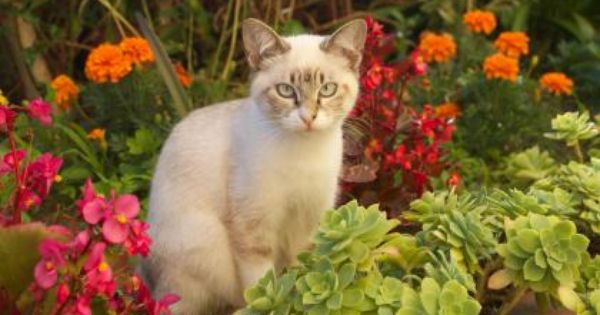 Garden Cat Hd Wallpaper Cats Cute Animals Garden