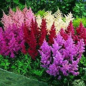 Product 260 Jpg 280 280 Shade Plants Flower Landscape Shade Flowers