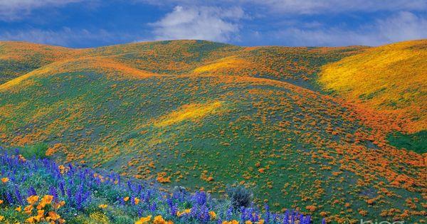 spring wildflowers in antelope - photo #21