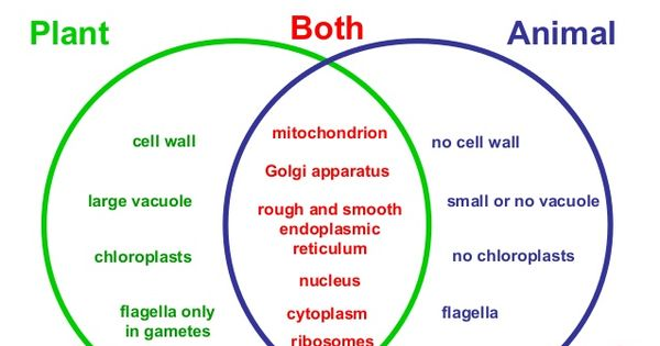 plant and animal cells not labeled - Google Search | 6th ...