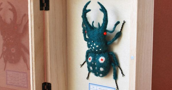 Handmade - Insect Cabinets
