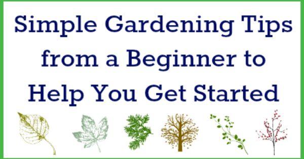 Easy realistic gardening tips from a beginner thrifty tips - Money saving tips in gardening ...