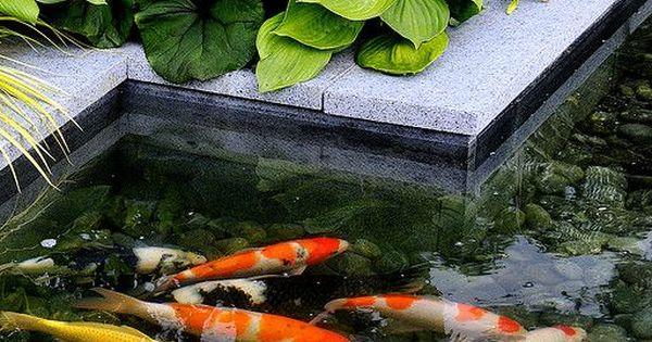 V ly building a koi pond veggie waterfall filter for Pond veggie filter