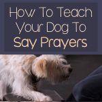 How To Teach Your Dog To Say Prayers Animals Teach Dog Tricks
