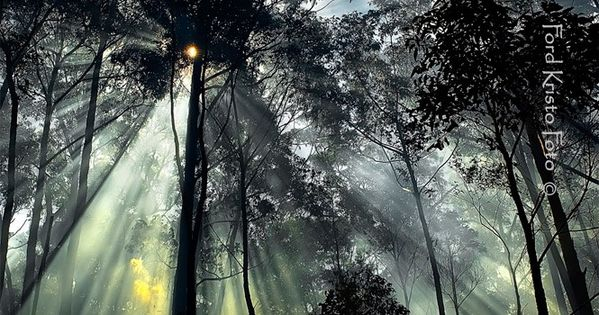 Amazing photography, See the light through the trees...