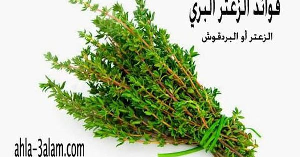 فوائد الزعتر الصحة للمناعة والجسم نبات البردقوش البري Herbs Health Healthy