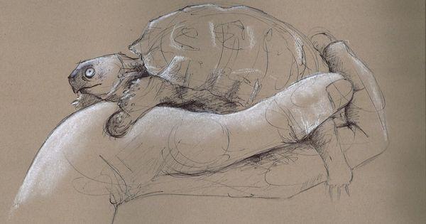 tortoise drawing for pinterest - photo #2