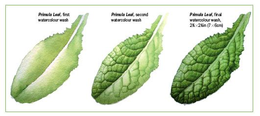 How To Paint Leaves In Watercolour Features Painters Online