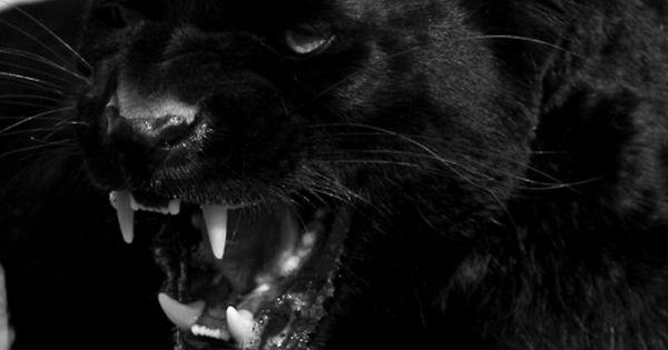 Black Panther Recipes