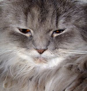 196e2a386754c8740975657f501e467f - How To Get Rid Of Matted Hair Clumps On Cats