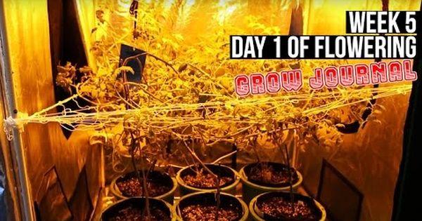 Complete Hydro Grow Tent Kit System Week 5 Grow Journal Flowering In Your Garden Begins Grow Tent Growing Hydro