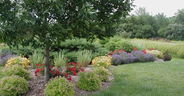 Sunny hillside landscape design shrub border for Hillside landscaping plants