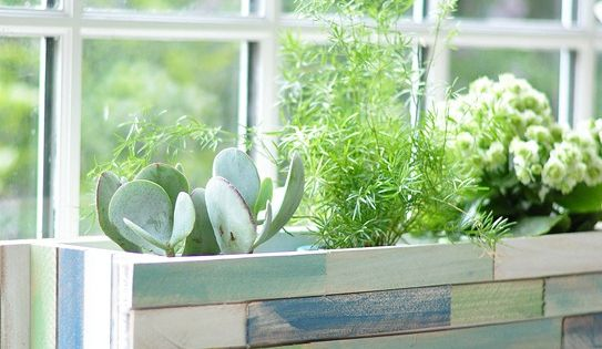 Window Planter Boxes Indoor- for succulents in the kitchen window.