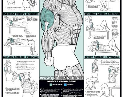 Triceps Workout for Men - Barbell Dumbbell Seated Exercise ...
