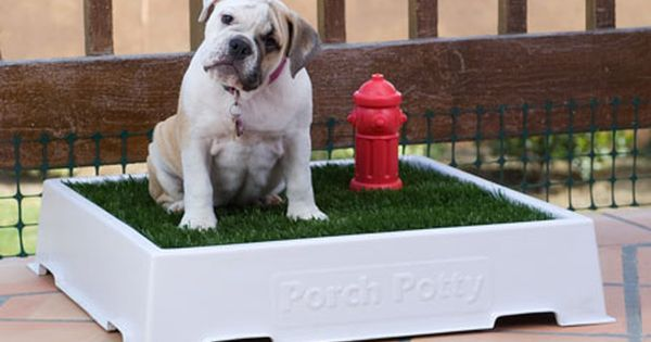 Porch Potty Just Bought This For My French Bull Dog Who Doesn T Like To Get His Feet Wet On Rainy Days It Better Work Dog Potty Area Dog Potty Indoor Dog