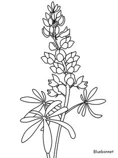 Texas Bluebonnet Flower Drawings Flower Coloring Pages Flower