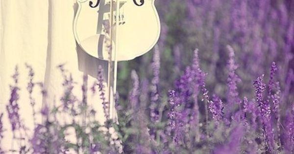 Lavender & violin music
