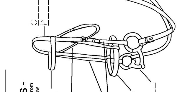 English Bridle Parts Worksheet Horses Pinterest Worksheets