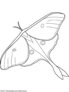 Realistic Luna Moth Coloring Page Patrons Pinterest Moth