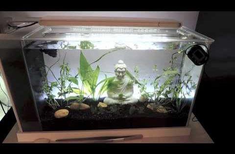 Fluval spec 5 gallon aquarium review youtube indoor for Koi pond size requirements