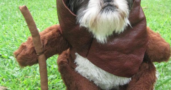Ewok Star Wars Dog Halloween Costume -- Sorry, Izzie. This is happening.