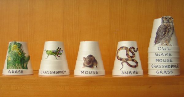 Food Chain Stacking Cups - make this for the nature center out