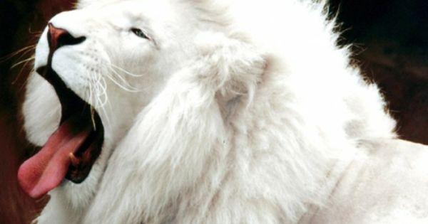 Weisse Tiere Der Albinismus In Der Unglaublichen Natur