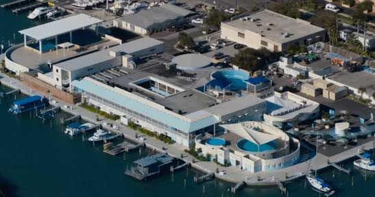 Clearwater Marine Aquarium Cma Inspires Passion To Respect And Protect Our Marine Life And