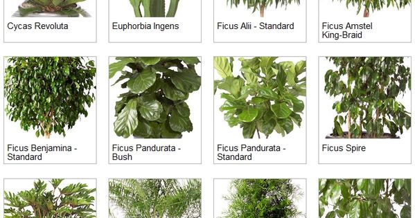 Indoor Palms Identification | Indoor Tropical Plants ...