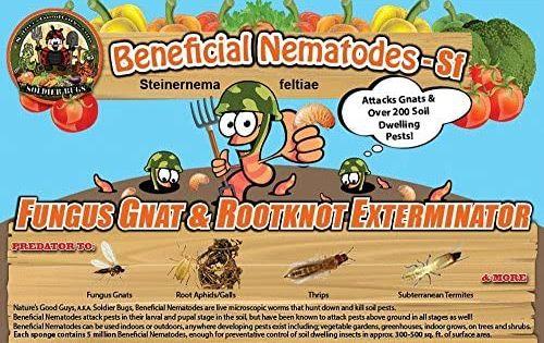 Amazon Com Nature S Good Guys 50 Million Live Beneficial Nematodes Sf Steinernema Feltiae Garden Outdoor In 2020 Get Rid Of Ticks Fungi Soil