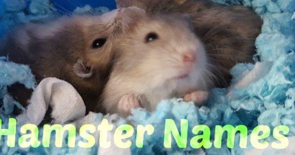 Cute Hamster Names For Dwarfs Females Males Hamster Names Cute Hamster Names Hamster