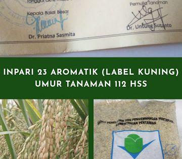 Benih Padi Inpari 23 Aromatik Label Kuning Benih Tanggal Petani