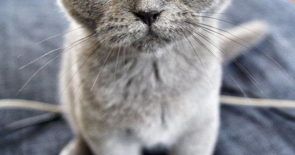 Cat - good photo
