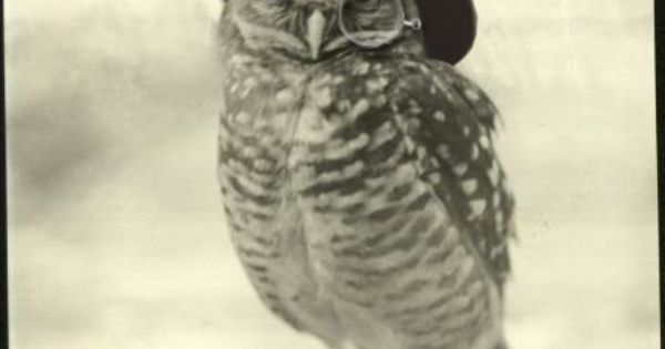 Ive been wanting an owl tattoo for years. But have never been