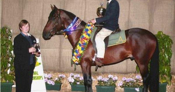 Barnett Stock Horses Breeding Quality Performance Horses Horses Horse Breeds Animals