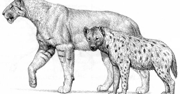 Hyena, Extinct and Anton on Pinterest
