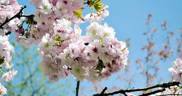 photo by LatteLisa, taken in Den Brandt Park in Antwerp, Belgium, spring 2011