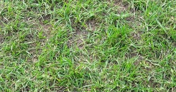 Homemade weed killer that is safe for grass grasses lawn weeds and