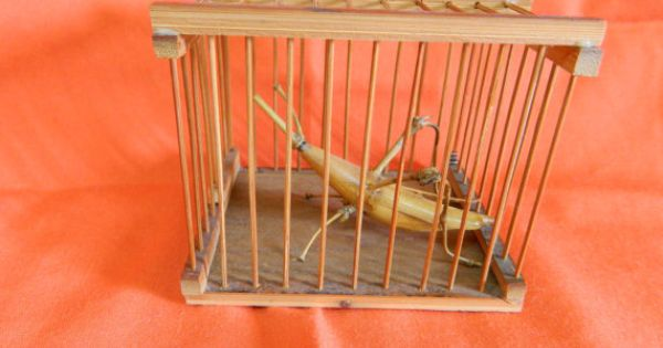 cricket cages | On Sale BAMBOO CRICKET & CAGE Japanese ...