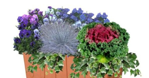 Epingle Par Catherine Berrube Sur Jardinieres Planter Des Fleurs