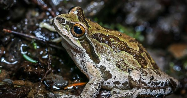 near you build a backyard pond or marsh to help protect frogs find