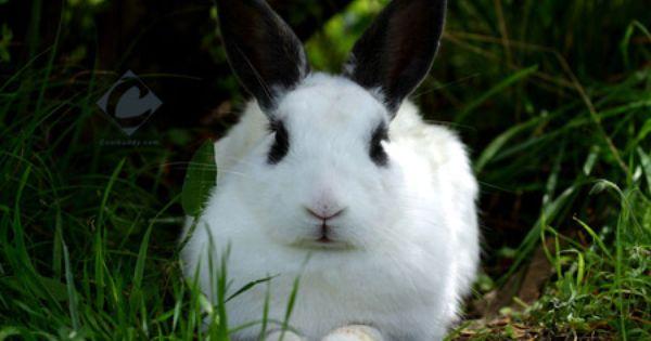 Rabbit Rodents Wallpaper Id 45811 Desktop Nexus Animals Rabbit Wallpaper Cute Bunny Pictures Bunny Pictures