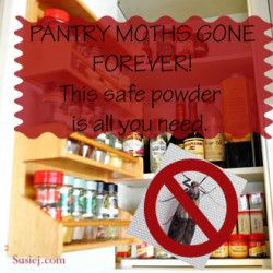 1b084440bed250156c69707c57205b0d - How To Get Rid Of Pantry Moths And Larvae