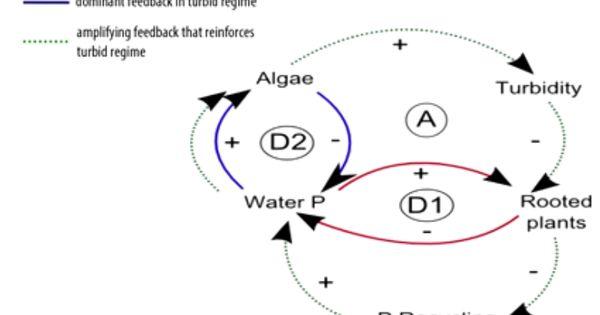 causal loop eutrophication