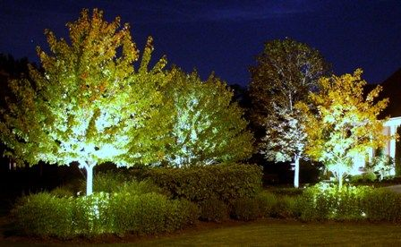 Instead Of Down Lights Uplight The Trees Landscape