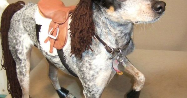 My little pony! (A dog's Halloween costume). puppied This dog makes a