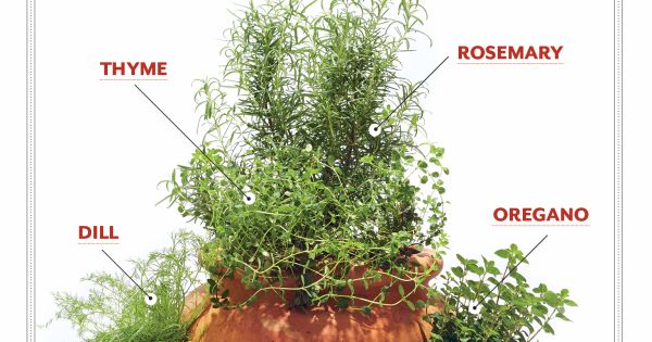 how to grow your own pot