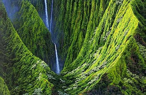 Visit the Hawaiian islands. And maybe a jungle too!